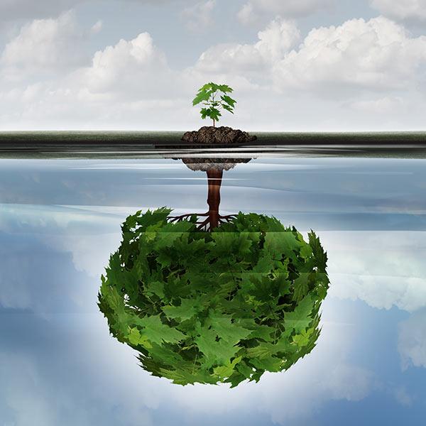 Environmental awareness tree
